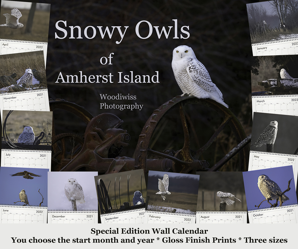 Snowy Owl Calendar-Woodiwiss Photography-Amherst Island-Amherst Island Owls-Birds of Prey-Owl Magic-Nature Calendar-Owls