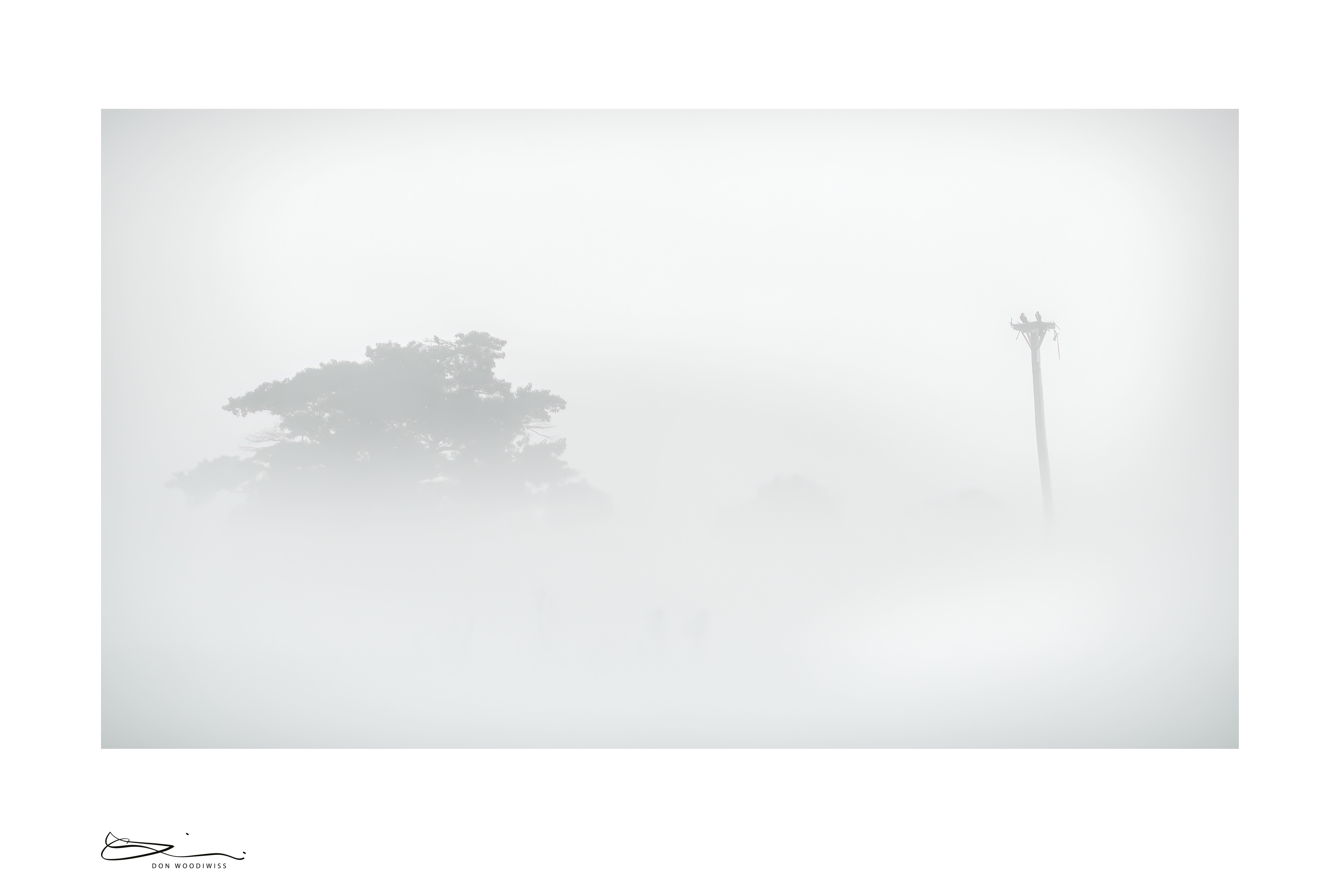 Don Woodiwiss-Woodiwiss Photography-osprey